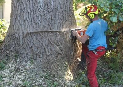 Kosten boom kappen en afvoeren
