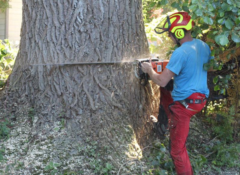 Joachim Storm van Storm Boomverzorging kapt een boom op Chaletpark De Hanenburg in Ermelo