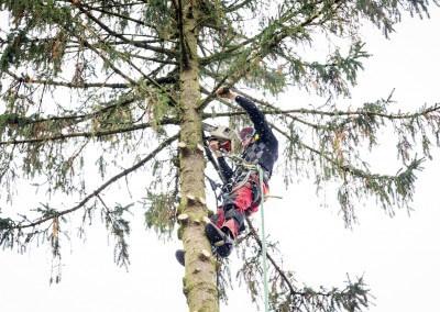 Snoeien van uw boom
